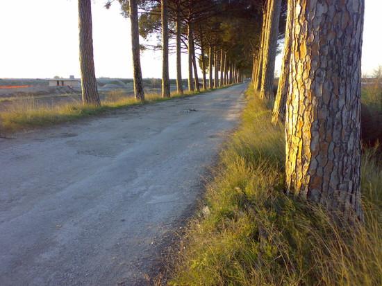 Il viale lungo il quale avvengono gli sversamenti