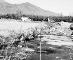 Capi irrigati con acque avvelenate