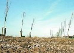 Alcuni alberi piantumati in un'area da recuperare