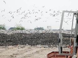 Giugliano, le immondizie dell'impianto di Cdr nutrono migliaia di gabbiani