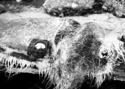 Fibre di amianto e lana roccia inb libertà, pannelli di eternit in disfacimento all'aria. Sono tra i rifiuti più pericolosi ritrovati dalla Guardia di Finanza nella vastissima estensione di 65mila metri quadrati. Complessivamente l'area occupata da rifiuti è pari a 35 metri cubi.