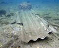 Lastre di fibre di amianto nel mare tra l'Arsenale e il Parco di Caprera