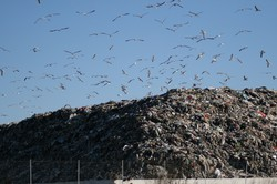 Sito di compostaggio in costruzione